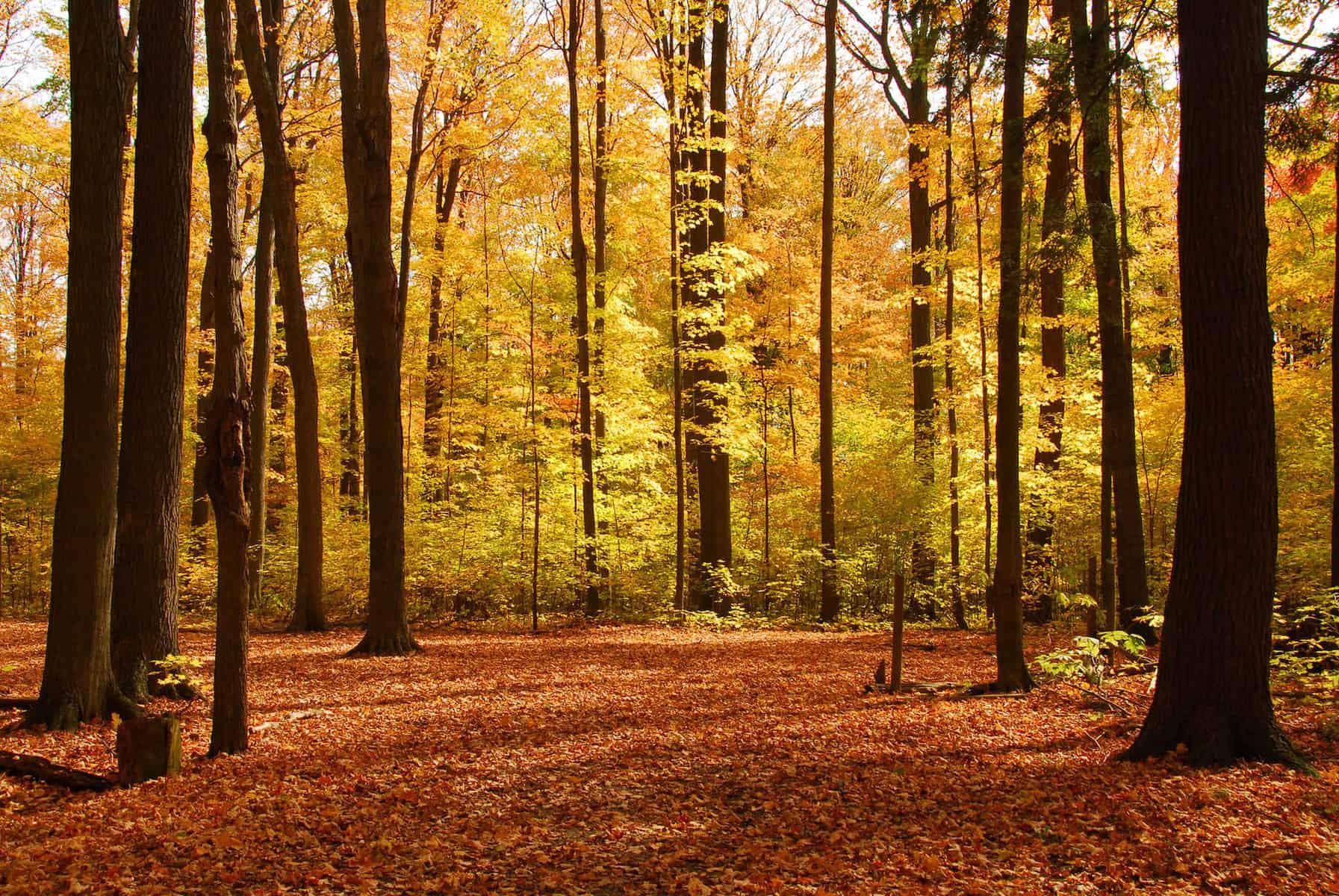 Timber Buyer - Logging Company