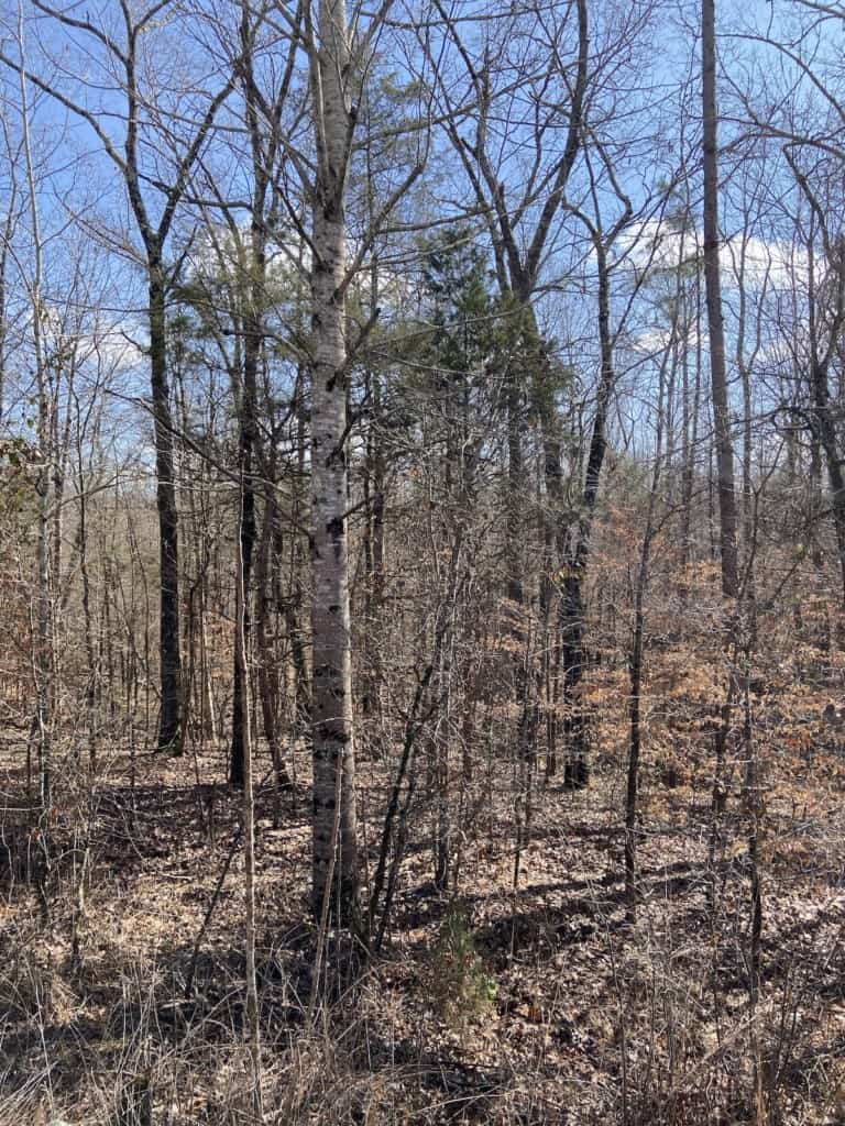 Hwy 125 100 acres land for sale west tn