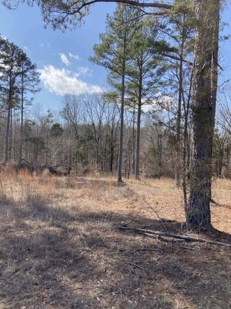 Hunting Land for Sale in West TN