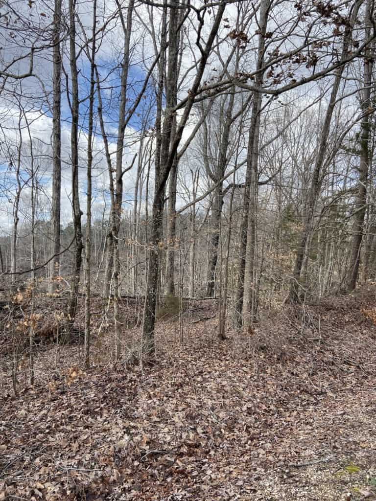 Land for Sale Hardeman County TN